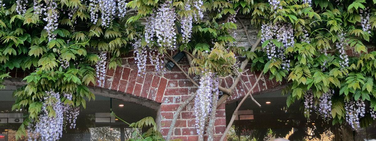 trelissick-garden
